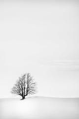 Alone (Sandra Herber) Tags: winter snow toronto canada tree minimalism minimalist caledon