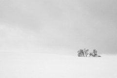 (DhkZ) Tags: trees sky blackandwhite snow ontario canada hill snowstorm canon10d kingcity canon1740mmf4l