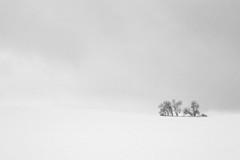 (DhkZ) Tags: trees sky blackandwhite snow ontario canada hill snowstorm canon10d kingcity canon1740mmf4l