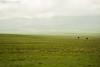 No Others (Arash Sefid) Tags: green beauty other spring nikon couple no arash lonely sefid 24120 shirvan d700 serani golool golooloserani