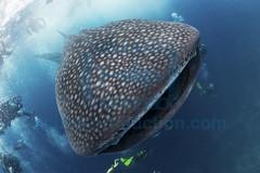 2013 10 VOISIN MALDIVES-0482