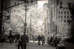 photoofhteday22012015 (victorydesignsny) Tags: nyc blackandwhite newyork canon eos cityscape manhattan thecity streetphotography midtown newyorknewyork blackandwhitephotography streetviews photooftheday thebigapple theempirestate thecitythatdoesntsleep