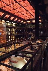 La Grande Galerie de L'volution | MNHN | PARIS 5e (Elisabeth de Ru) Tags: paris france museum geotagged evolution parijs parys  parisi   pariz mnhn  lagrandegaleriedelvolution  elisabethderu|2015 camerasony300 paris2325january2015 elisabethderu