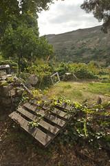 Andros - Close to Pythara (DA.S.) Tags: landscape greece vegetation andros pythara