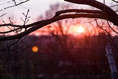 A Winter's tale (Pixietoria) Tags: city sunset sky sun tree silhouette fence branch horizon lensflare goldenhour