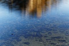 20150205-125-Lake Oberon reflections (Roger T Wong) Tags: reflection water trek outdoors nationalpark walk australia hike tasmania np bushwalk quartzite tramp wha 2015 southwestnationalpark westernarthurs canonef24105mmf4lisusm worldheritagearea canon24105 canoneos6d lakeoberon westernarthurrange rogertwong