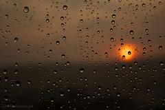 Rain, Drops and Sun 1 (paulo.maziero) Tags: sunset sun sol window glass rain canon chuva