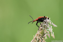 DN9A8584 (Josette Veltman) Tags: macro nature canon bug natuur bugs photowalk lente zwolle landschap insecten ivn westerveldsebos photowalkzwolle