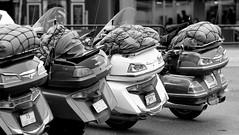 Goldwings (limerot) Tags: honda blackwhite motorcycles motorcycle bergen goldwing motorcycletouring samyang samyang85mm fujifilmxt1