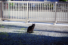 Today's Cat@2016-05-14 (masatsu) Tags: cat pentax catspotting mx1 thebiggestgroupwithonlycats