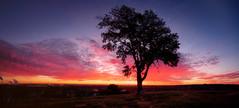 +LonelyTree_EM18149-HDR-Pano-Edit.jpg (jmcpheeters) Tags: cloud field clouds sunrise landscape unitedstates time location land kansas cloudscape cloudscapes douglascounty landscapephotography imagetype photospecs