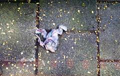 He had so much potential (Arne Kuilman) Tags: bird film netherlands amsterdam dead death iso200 nederland olympus scan chick fallen mjuii vogel jong expiredfilm mju2 spectorcolor