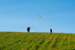 20160515-DSC_9128 (mohan.ajmani) Tags: california kite sport berkeley cesarchavezpark