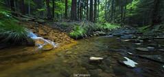 Schwefelquelle1 (cd photography2015) Tags: wood tree water forest canon eos wasser long exposure bach holz wald bau gebirge 6d langzeitbelichtung schwefel zittauer