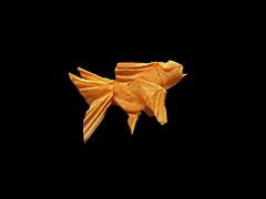 Goldfish (Al3bbasi.) Tags: sculpture fish art paper design origami goldfish sealife robertlang kamiyasatoshi al3bbasi