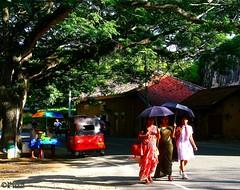The Walk (1) (Mahmoud R Maheri) Tags: street building tree umbrella walking women srilanka ethnic galle sunnyday streetvendor