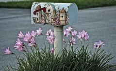 Spring Mail (ACEZandEIGHTZ) Tags: pink flowers mailbox spring blumen lilies blume springtime rainlilies