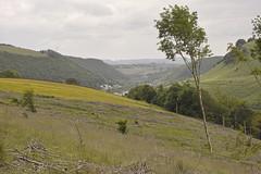 Valley scene (Parishes of the Buzzard) Tags: flowers trees june wales woodland oak farm scenic greenery bracken welsh ferns hillside windturbine deri 2016 darranvalley