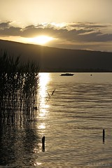Golden moment (nathaliedunaigre) Tags: sunset lake france water reeds gold golden boat eau quiet or lac bateau roseaux calme coucherdesoleil lacdannecy dor hautesavoie