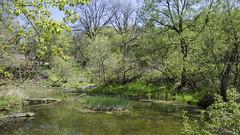 On Green Pond DSL7898 (iloleo) Tags: park toronto green nature landscape spring pond scenic nikond7000 lowerdonparklands