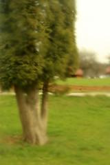 Tree (gripspix (OFF)) Tags: glass germany deutschland blurry distorted pane unscharf baum glas dettingen archiv irregular lookingthrough ree badenwrttemberg scheibe horb verzerrt durchsicht priorberg unregelmssig 20160404