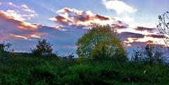 Abendhimmel im Strohgu, 75063/6722 (roba66) Tags: sunset sky sun sol germany atardecer abend sonnenuntergang sundown amanecer ama sonne abendhimmel ata badenwrttemberg soleilcouchant soleillevant imlndleunterwegs gartenparknatur
