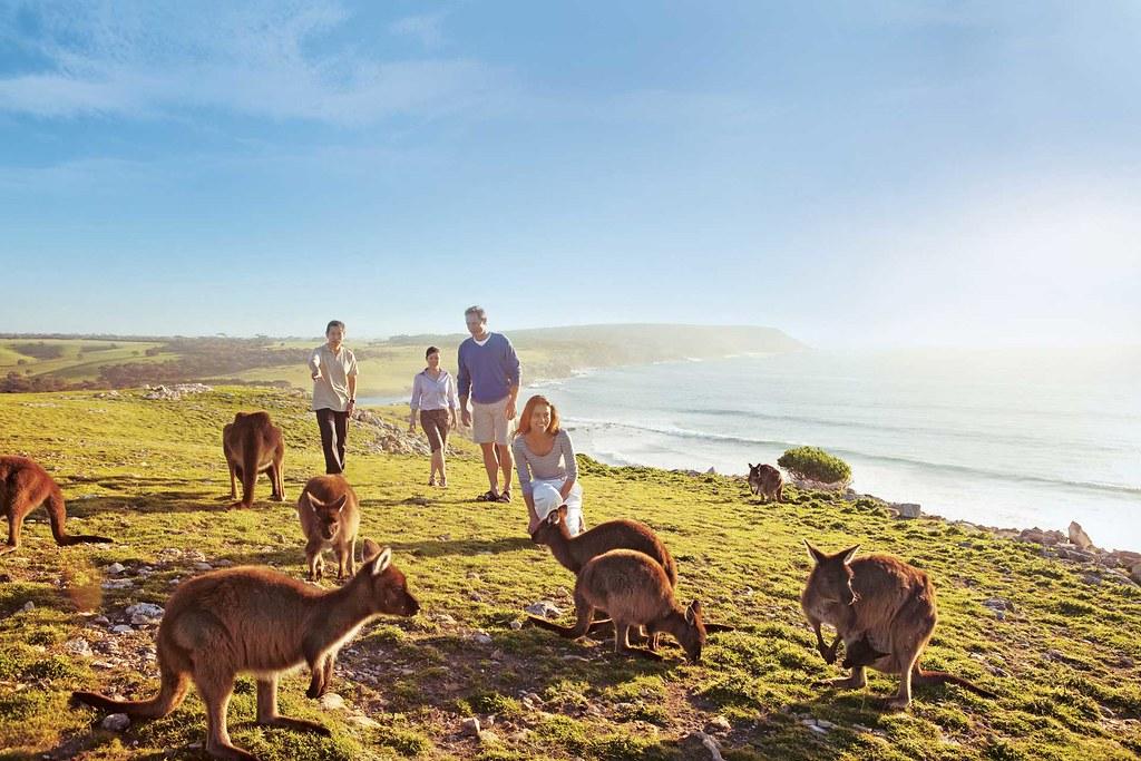 Kangaroos on cliff top : Waves & Wildlife / Paul's Place
