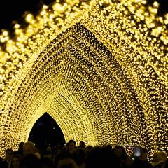 Cathedral of Light (daniel_james) Tags: sydney vivid australia nsw royalbotanicgardens 2016 cathedraloflight tamron60mmmacro