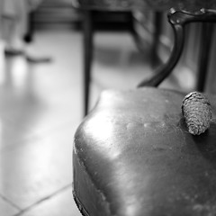 stand dont sit (Andrew Malbon) Tags: chichester pallant gallery artgallery art chair empty emptychairs emptyseat pallantgallery leica leicam9 m9 summilux 35mmf14 35mm f14 leather paving bokeh pinecone feet blackwhite black bw indoors inside museum vintage wabisabi cracked space