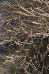 ist-closeup (jamin.sandler) Tags: pentaxistds smcpentaxazoom143570mm