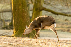 Yeees. That's the spot! (powerdook) Tags: park trees color nature animal forest fur legs wildlife deer scratch spromg