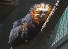 National Zoo  (1297) (smata2) Tags: zoo nationscapital smithsoniannationalzoo itsazoooutthere zoosofnorthamerica