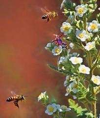 Season Of The Assassin!!! (Jo-I Have A New Group!) Tags: bees bugs assassin odc signsoftheseason fernbush