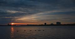 Good morning Ottawa! (tsandra996) Tags: water birds clouds sunrise river ottawa