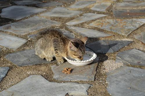 Dando de comer al Gatito
