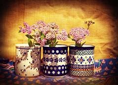still life_theme-045_010 (kazimierz.pietruszewski) Tags: stilllife cups colorful flowers yellow fineart