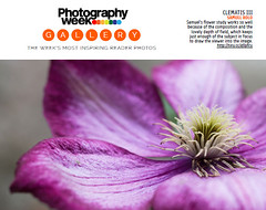 Publication (samuel.rolo) Tags: flower nikon purple iii clematis week edition samuel 198 rolo photograpy d610
