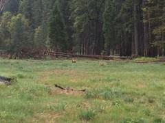 Yosemite Park - increíble!!! - pica oso!