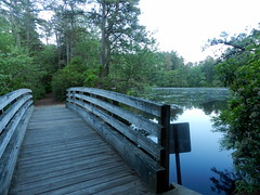 Along the Nature Trail (Christine_Ray) Tags: new pine forest state reserve national jersey pinelands barrens belleplain belleplaincapemayandparvin capemayandparvin