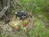 069 (731132) Tags: old junk rust rusty rost rostig skrot gammal lawnmover gräsklippare 731132