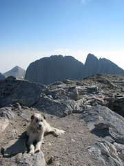 resting after the climb (stefg74) Tags: dog mountain dogs peak olympus greece olympos olimpos olimposeu wwwolimposeu