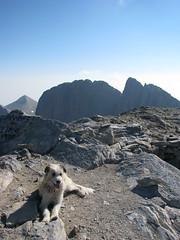 resting after the climb (stefg74) Tags: dog mountain dogs peak olympus greece olympos olimpos olimposeu wwwolimposeu