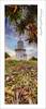 Path To Guidance (Maxwell Campbell) Tags: light panorama lighthouse tree sunrise canon palms landscape photography coast australia nsw tweed pandanus fingal vetorama fingalheadland maxwellcampbell