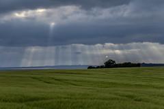 Sunrays breaking through clouds; Durchbrechende Sonnenstrahlen (Thragor) Tags: vacation cloud sun field landscape denmark countryside holidays urlaub feld wolke landschaft sonne dnemark assens syddanmark