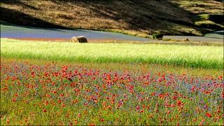 Castelluccio di Norcia - light and colors