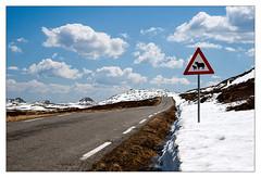 Attention! Sau crossing! (leo.roos) Tags: roadsign sheepandlamb verkeersbord trafficsign norway noorwegen 2012 spring lente darosa leoroos norwayspring2012 2552012 gaustatoppen gausdalen kjerringsveiven miland tuddal a900 sonyczvariosonnar247028 zeiss snow sneeuw mountgausta rjukan telemark