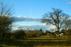 Paisaje invernal (leograttoni) Tags: trees winter sky field clouds landscape buenosaires arboles paisaje cielo nubes campo invierno magdalena