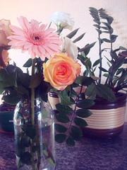 flores para mim (I.souza) Tags: sonydscw90 setembrochove