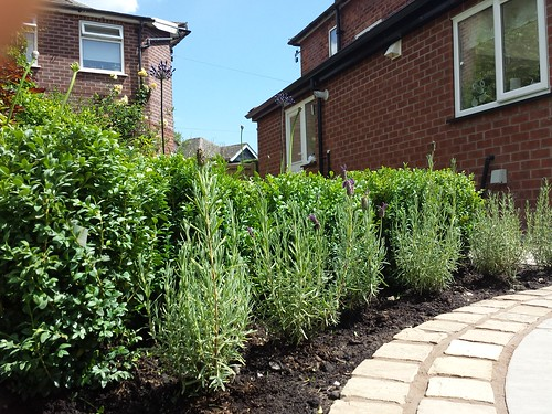 Landscaping and Paving Handforth Image 9