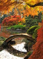 Fall at the Koi Pond (HorsePunchKid) Tags: gothamist brooklynbotanicgarden japanesehillandpondgarden seenongothamist